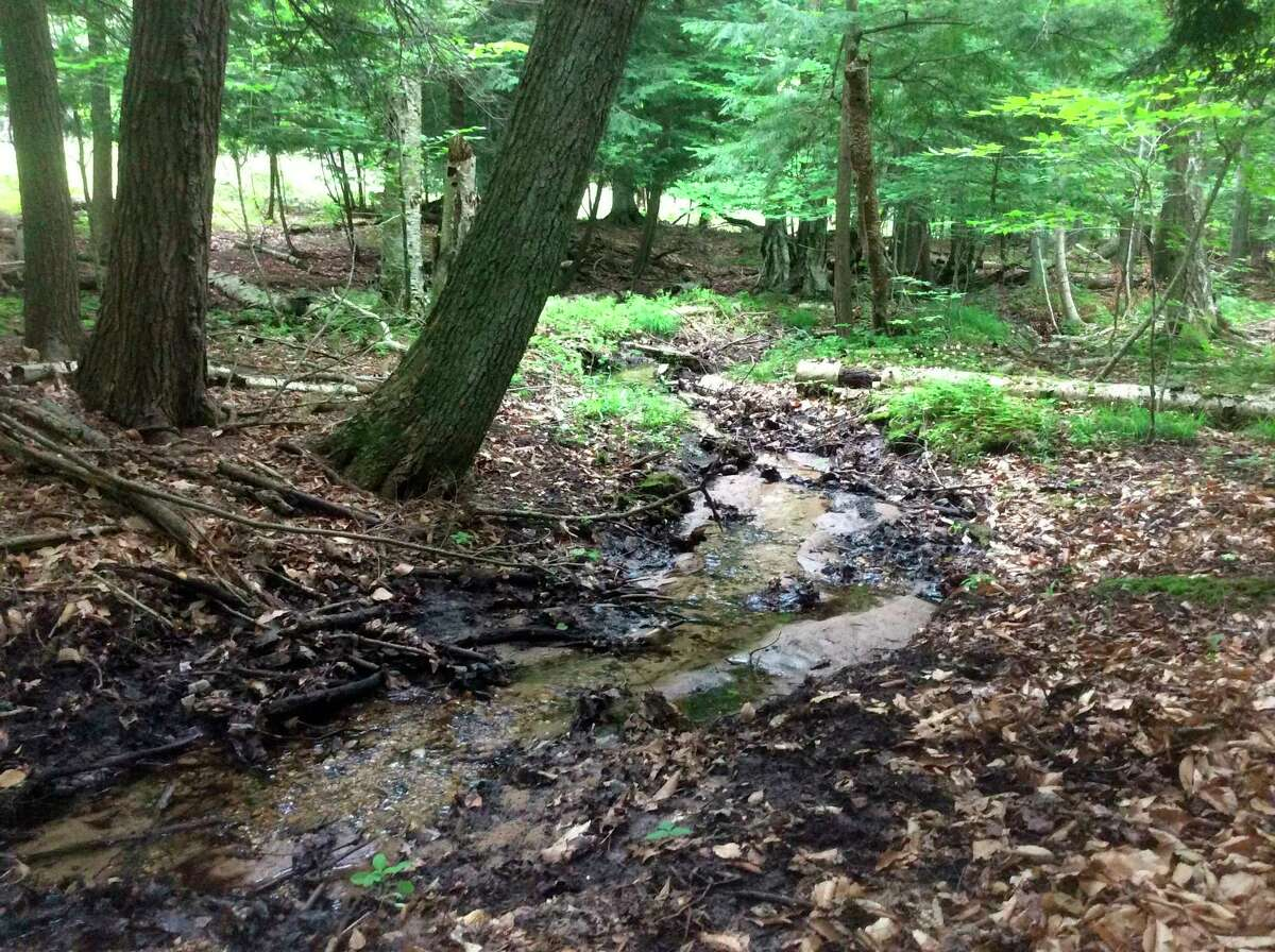 A creek runs though a 166 acre parcel of landbetween Long Lake and Rush Lake, which the Grand Traverse Regional Land Conservancy wants to purchase. (Courtesy Photo/GTRLC)
