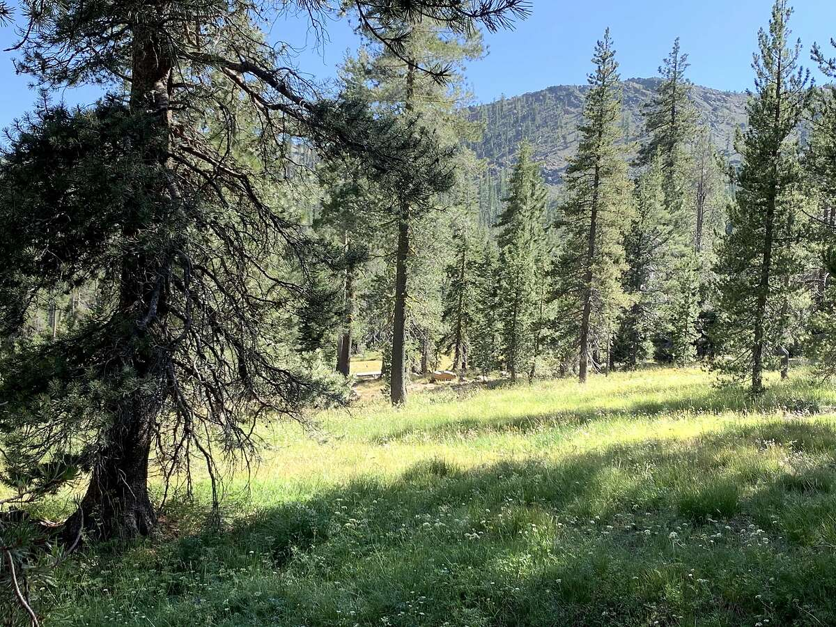 A pretty meadow at peak spring along the Toad Lake trail at the beginning of August in the Trinity Divide country of Northern California