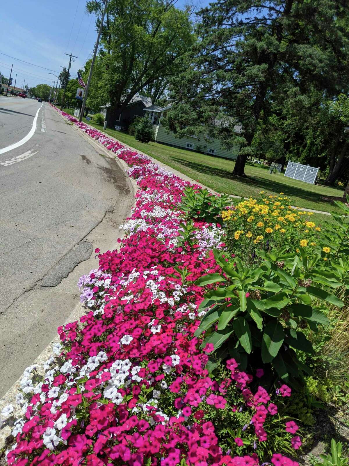 Volunteers took safety precautions in light of the coronavirus pandemic and planted the Petunia Parade in May along M-22 in Onekama. (Courtesy photo)