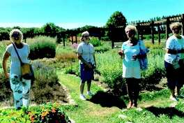 Spirit of the Woods Garden Club, Inc. members (from left) Vickie Johnson, Susanna Drake, Kathy Stefanski and Beth Markowski were part of a group that recently visited the Lavender Labyrinth in Shelby. (Courtesy photo)