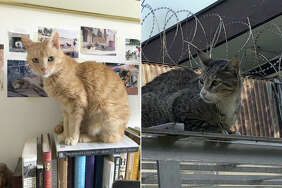 Cats from Kabul, Afghanistan.