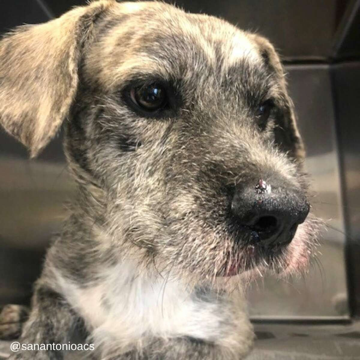 """""""He's a great dog. He just didn't make very good choices yesterday,"""" Norwood said. """"Porcupines don't play, they really don't. The curiosity in him got the best of him, but we are happy he is feeling better."""""""