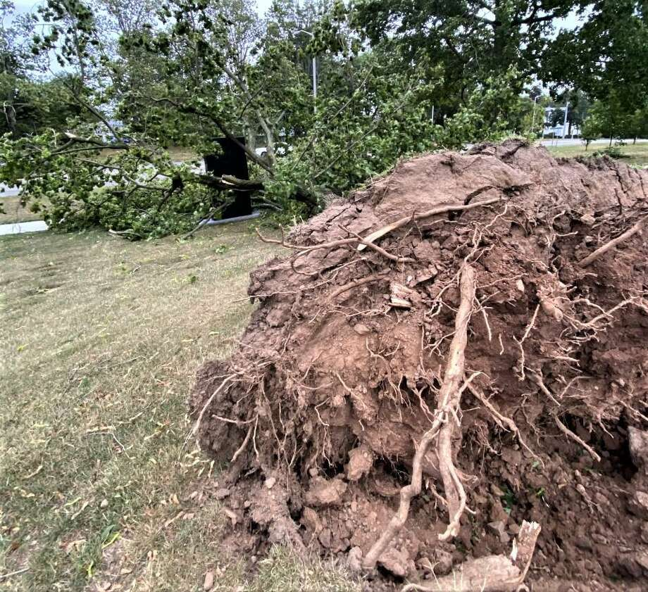 Powerful winds from Tropical Storm Isaias felled scores of trees across the city, knocking out power to thousands, as lightning sparked a fire in a tree outside the Middletown Board of Education on Hunting Hill Avenue Tuesday afternoon. Photo: Ed McKeon Photo