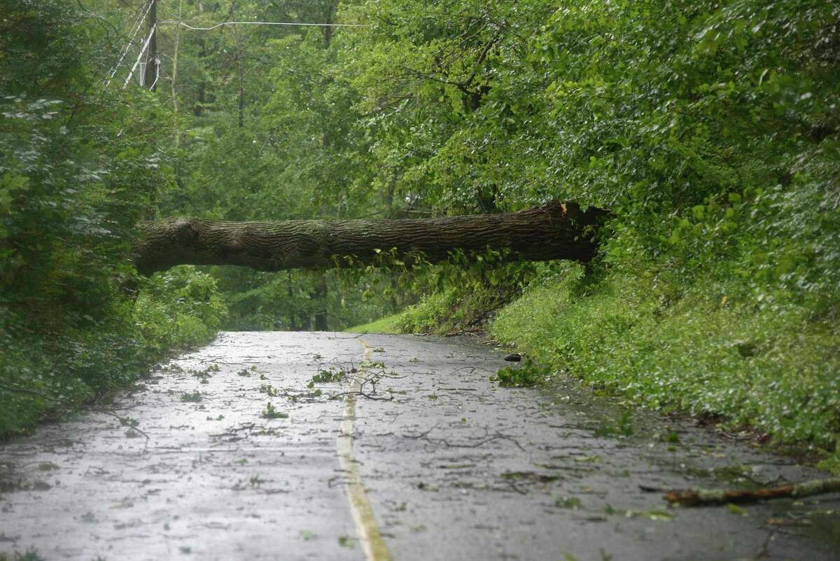 A fallen tree blocks a Danbury road during tropical storm Isaias Tuesday.