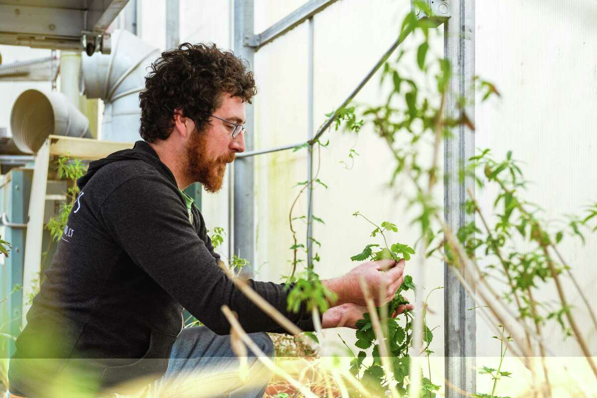 Alex DeFrancesco utilizes hops and other ingredients grown on his family's farm to create his craft brews.