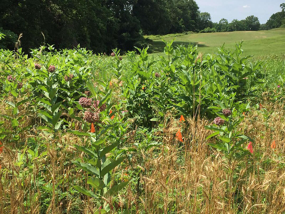 Invasive plants are spreading in Washington, D.C.'s Rock Creek Park, but the park's golf course has been subjected to a weeding and replanting to demonstrate what can be done.