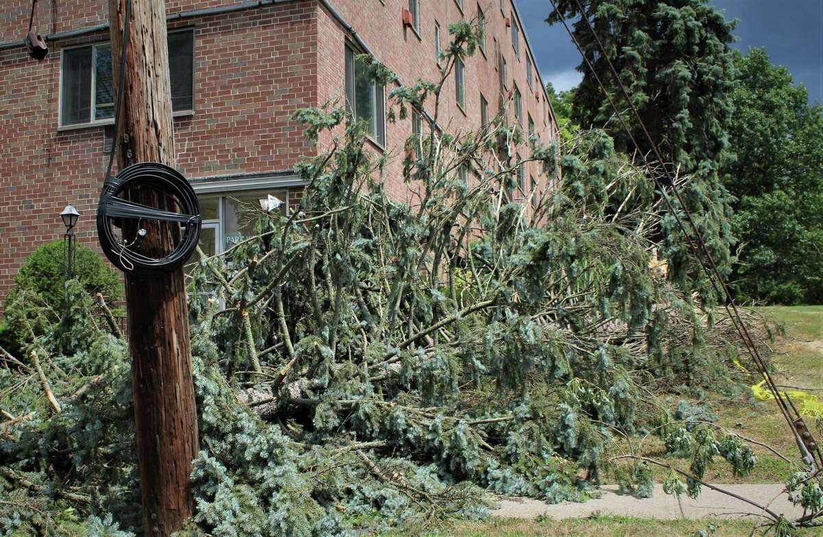 Shown here is some of the tree damage caused by Tropical Storm Isaias after it hit Connecticut Aug. 4.