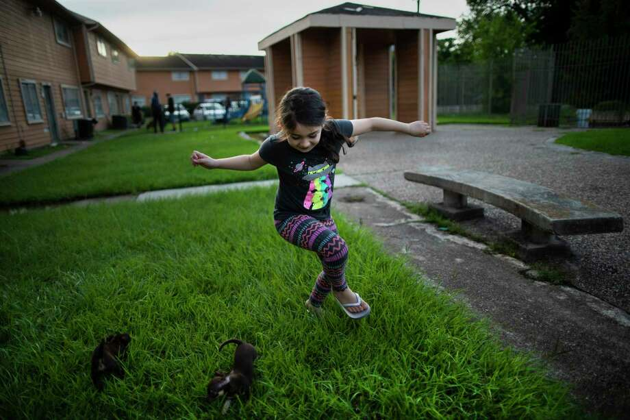 Emmarose Partida, 8, plays on Aug. 1 with two puppies her family found in need of a home near their home in Aldine. Partida's mother and father have chosen to not immediately send their children back to Aldine ISD schools due COVID-19 concerns and potential health implications. Photo: Marie D. De Jesús, Houston Chronicle / Staff Photographer / © 2020 Houston Chronicle