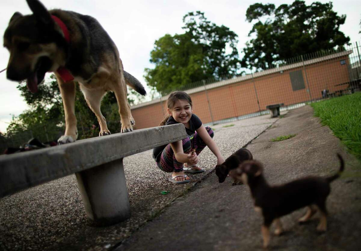 Emmarose Partida, 8, plays with her dogs at the apartment complex where she and her family lives in Aldine. Partida's mother and father have chosen to not immediately send their children back to Aldine ISD schools due COVID-19 concerns and potential health implications.