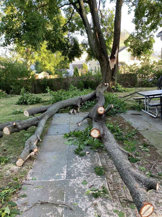 A tree blown over Tuesday during Tropical Storm Isaias that narrowly missed an East Main Street home. Photo: Contributed