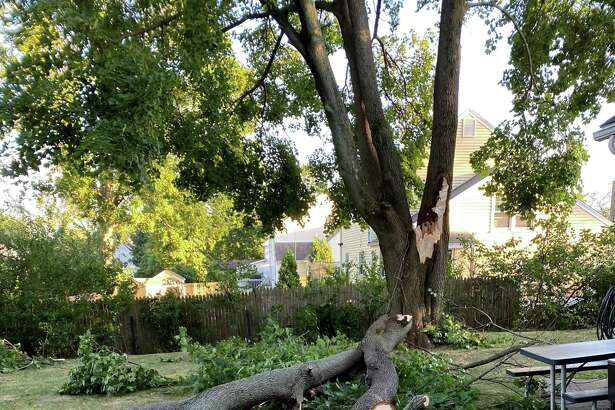 A tree blown over Tuesday during Tropical Storm Isaias that narrowly missed an East Main Street home.