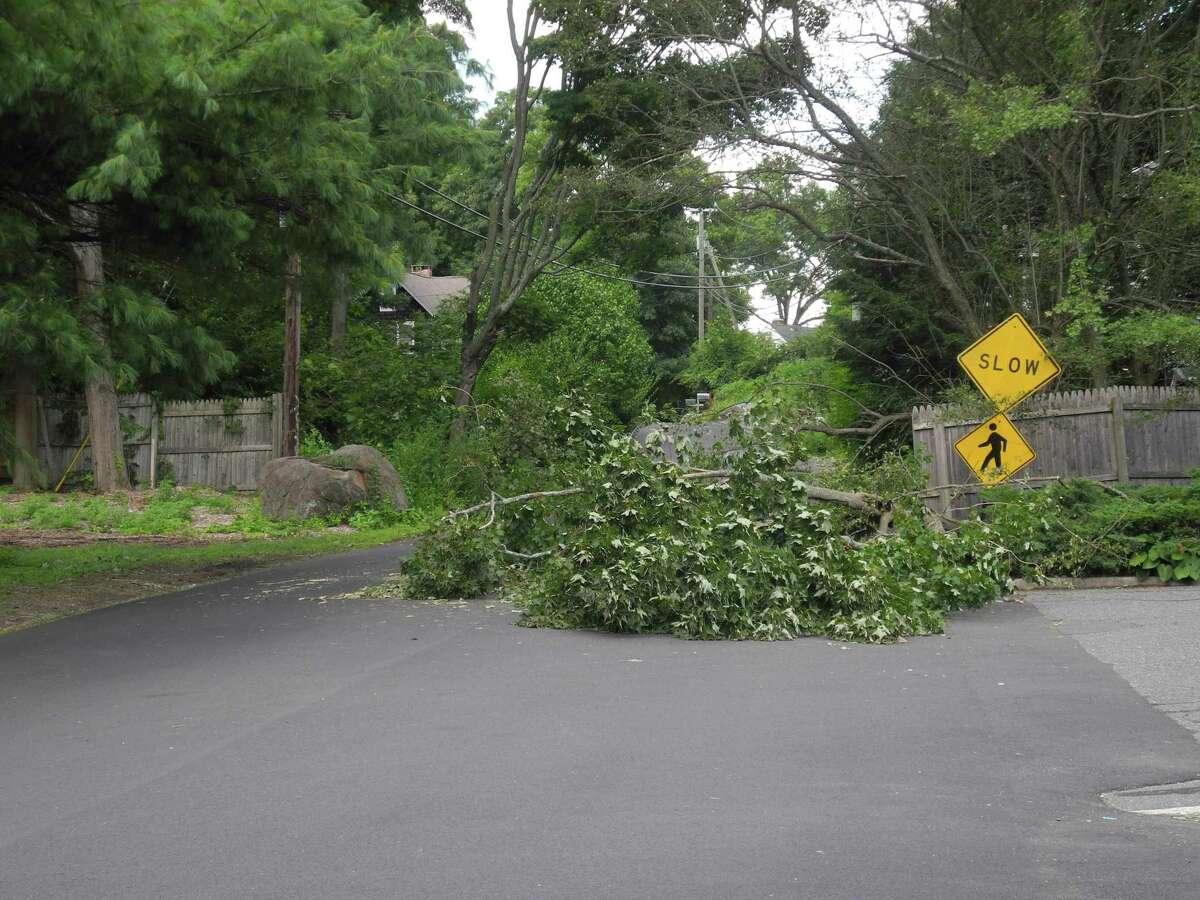 A tree lies in the middle of West Church Street in the Georgetown area of Wilton on Aug. 5.