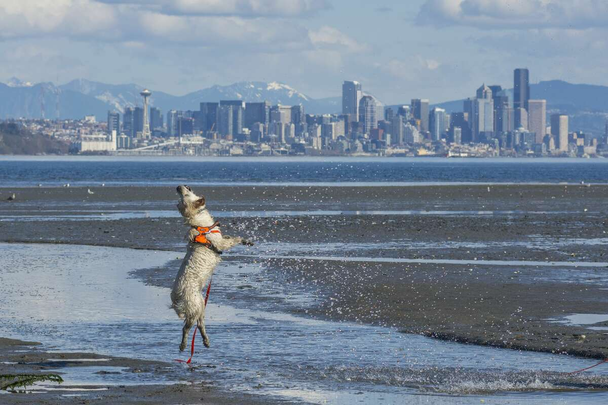 The study analyzed the 100 largest U.S. cities across three different categories including pet budget, which accounted for the cost of veterinary care in the city; pet health which factored in the number of pet-related businesses; and outdoor pet-friendliness which included dog parks and trails. Seattle earned the top spot in the nation for the most dog-friendly restaurants per capita, but scored less favorably in the pet budget category, perhaps reflecting the high cost of veterinary care. However, the Emerald City was found to be the 10th most walkable and had the 8th most pet businesses per capita of any city. Keep reading to see which metro areas made the top 10 most pet-friendly cities.