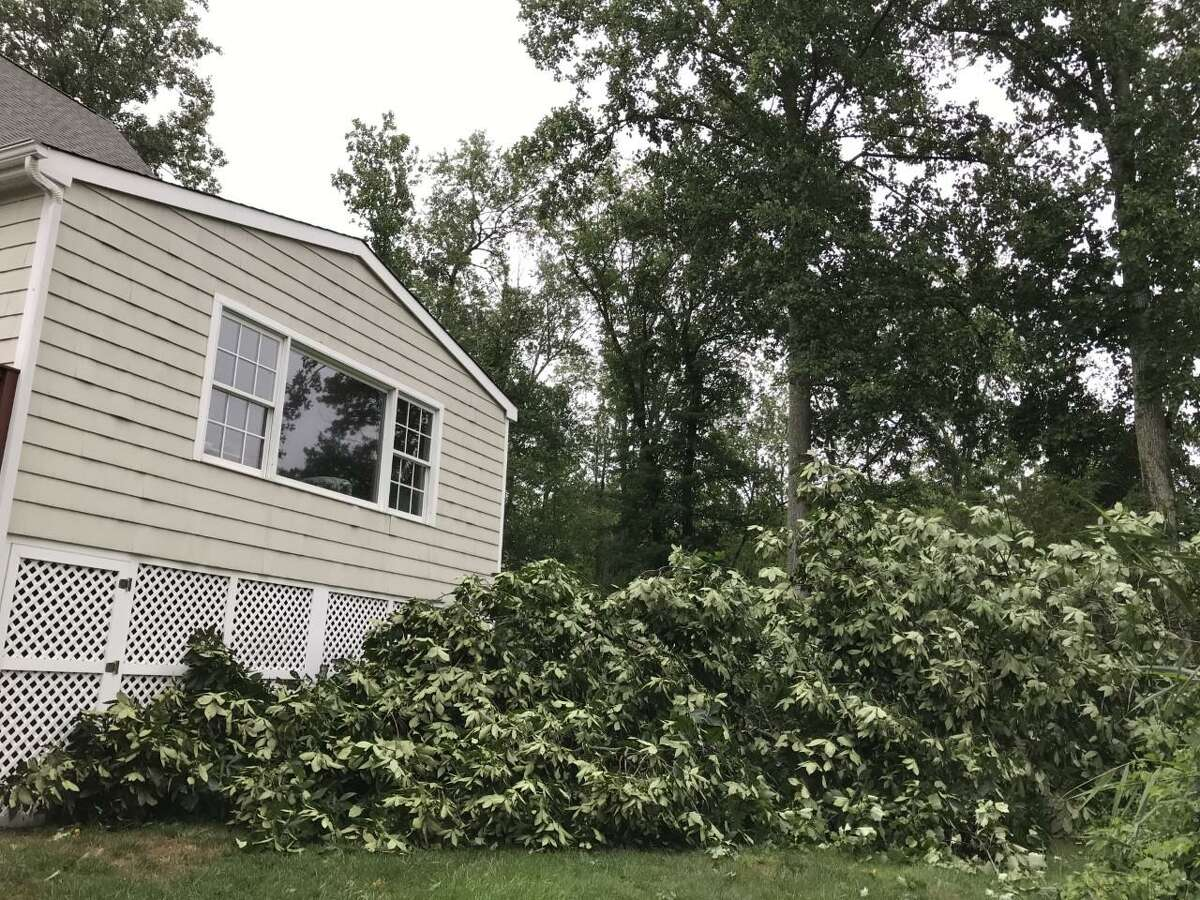 A tree just missed Selectwoman Deb McFadden's home on Westport Road after Tropical Storm Isaias pummeled Wilton on Aug. 4, 2020.