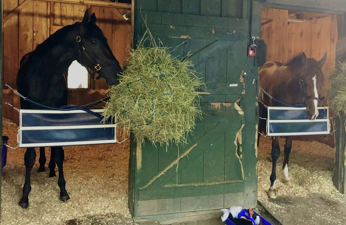 Here is quite the 1-2 punch. Hall of Fame trainer Bob Baffert has shipped a pair of his heavyweights to Saratoga to run in weekend stakes. At left is Uncle Chuck, who, after just two starts, is gunning for Tiz the Law in Saturday's Travers. His stablemate, 3-year-old filly Gamine, was keeping Uncle Chuck company on the Saratoga backstretch Wednesday morning. She will run in the Test Stakes on Travers day after romping by 183/4 lengths in the Acorn at Belmont in June. Tough duo. (Tim Wilkin / Times Union)
