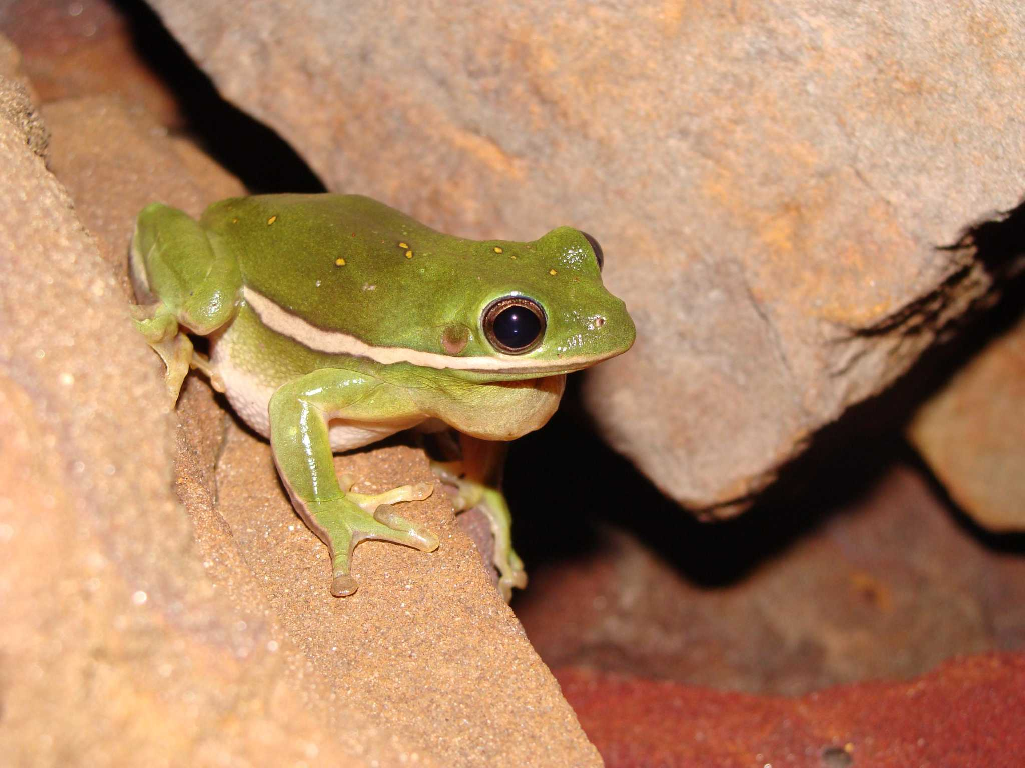 Amphibian armies set to descend on Montgomery County as summer nears end