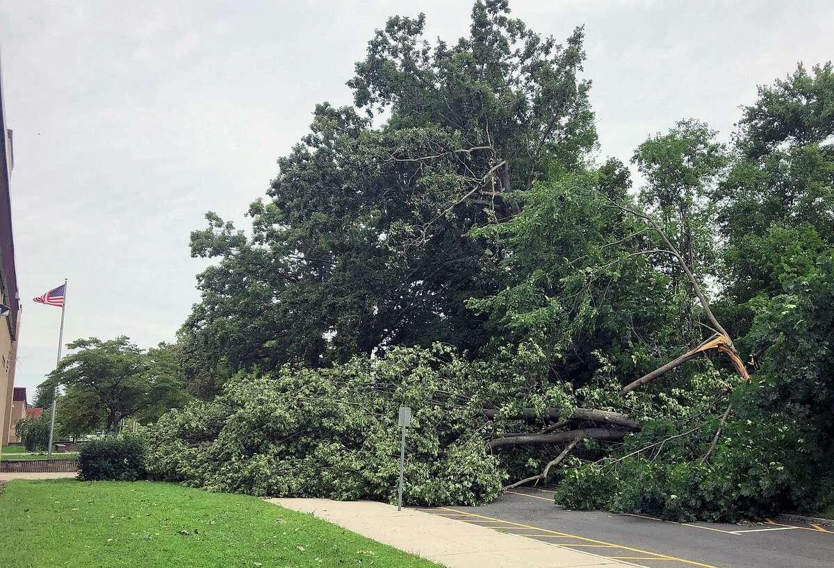 A fallen tree in front of Rogers Park Middle School in Danbury.