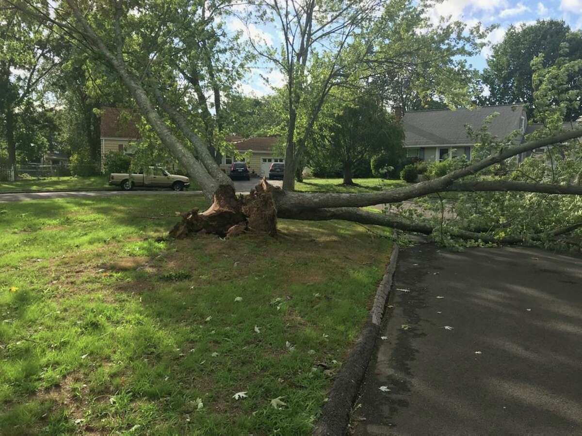 A tree was split in half during Tropical Storm Isaias at the top of Campfield Circle in Milford.