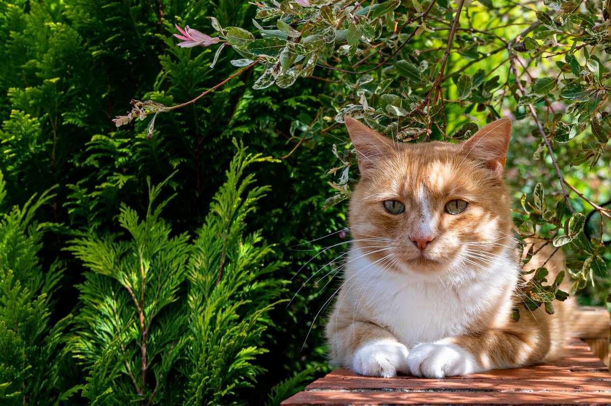 Pet budget ranking: 36 Pet health and wellness ranking: 22 Outdoor pet-friendliness rank: 18