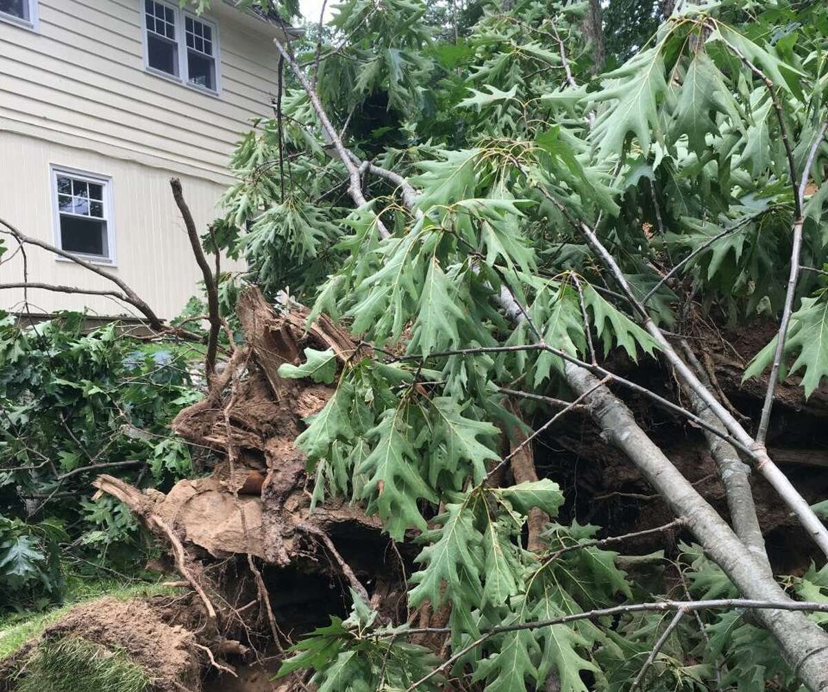 A broken tree lies near a home on Nod Hill Road, knocked over by high winds during Tropical Storm Isaias on Aug. 4.