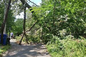 A downed tree has blocked access to Hunter Road in Danbury for days.