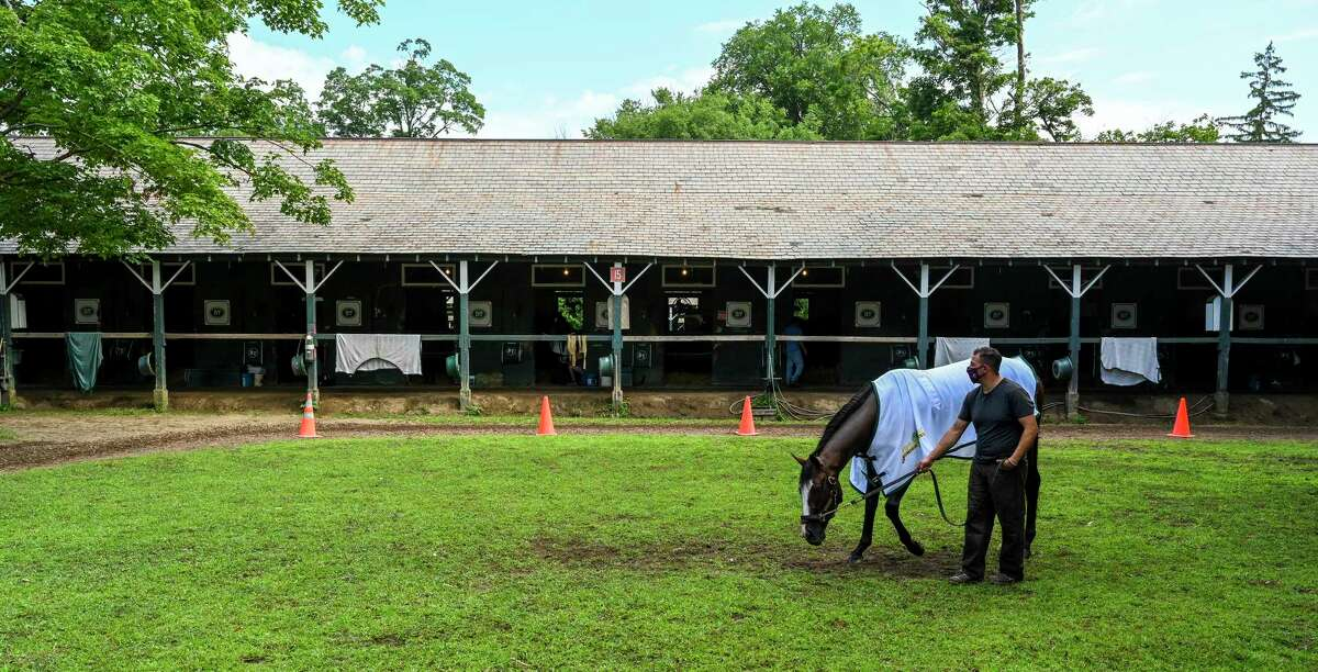 Travers Stakes presented by Runhappy Tiz the Law enjoys his day off as he grazes in the barn area at the Saratoga Race Course Sunday Aug.9, 2020 in Saratoga Springs, N.Y. Photo by Skip Dickstein/Special to the Times Union