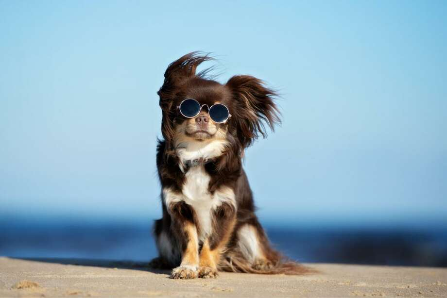 Stacker compiled a list of the most popular dog breeds of the 21st century, examining numbers from the American Kennel Club's most popular dog breeds from each year since 2000 and ranking them by their average, 20-year popularity. Photo: Otsphoto // Shutterstock
