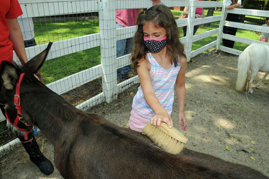 Savanna Wildhaber, 7, of St. Jacob, brushes a miniature donkey during Sunday's Pony Care class at Willoughby Farm, in Collinsville. Photo: David Blanchette   For Hearst Newspapers