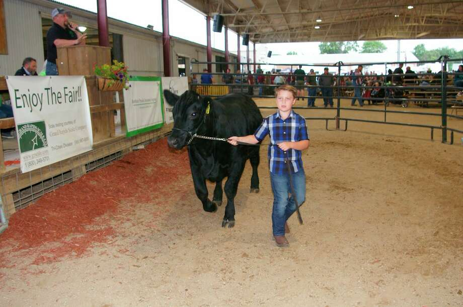 Ayouth shows his livestock at the 2019 Midland County Fair. This year's traditional fair is canceled but there will be exhibitor-only competition this year.All eventsare closed to spectators. (Daily News file photo)