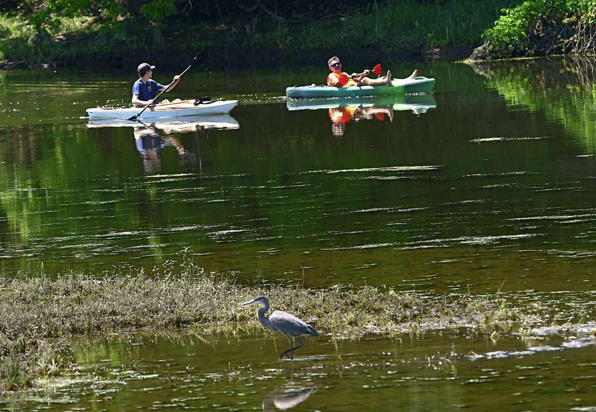 A couple kayakers paddle past a great blue heron looking for food in the Mohawk River near Peebles Island on Wednesday, Aug. 12, 2020 in Cohoes, N.Y. (Lori Van Buren/Times Union)