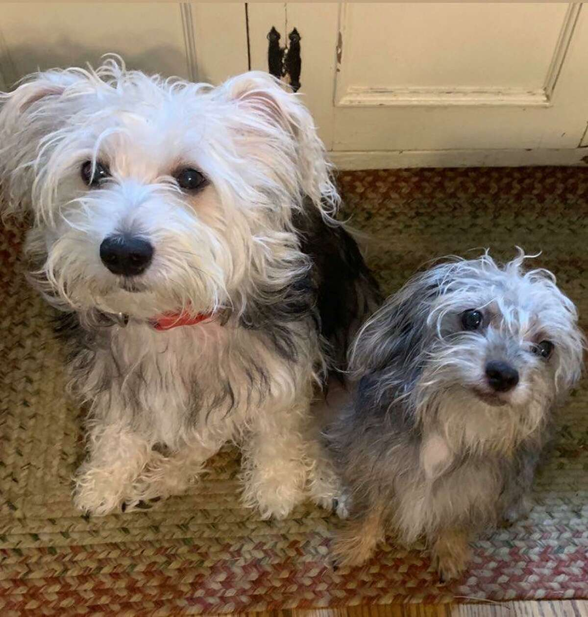 Nashville, TN resident, Stacey Harrison Boyd says her pups Simon and Lucy have always been a source of comfort, but especially now during quarantine.