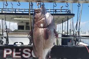 An angler from Corpus Christi caught a 53-pound Warsaw grouper during a nine-hour trip in Port Aransas on Tuesday, according to the Dolphin Docks Deep Sea Fishing boat captain Michael Matthew.