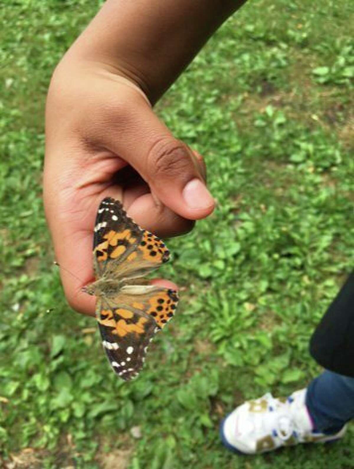 The event included a live butterfly release and special commemoration presentation. (Photo provided)