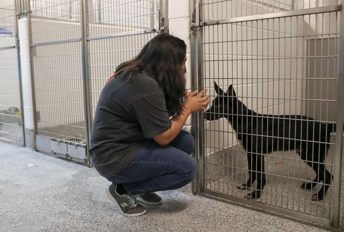 Sidney Salgado, a kennel technician, talks to a dog Wednesday, Aug. 12, 2020, at Harris County Pets in Houston. Animals were moved from the old shelter into the new shelter that morning.