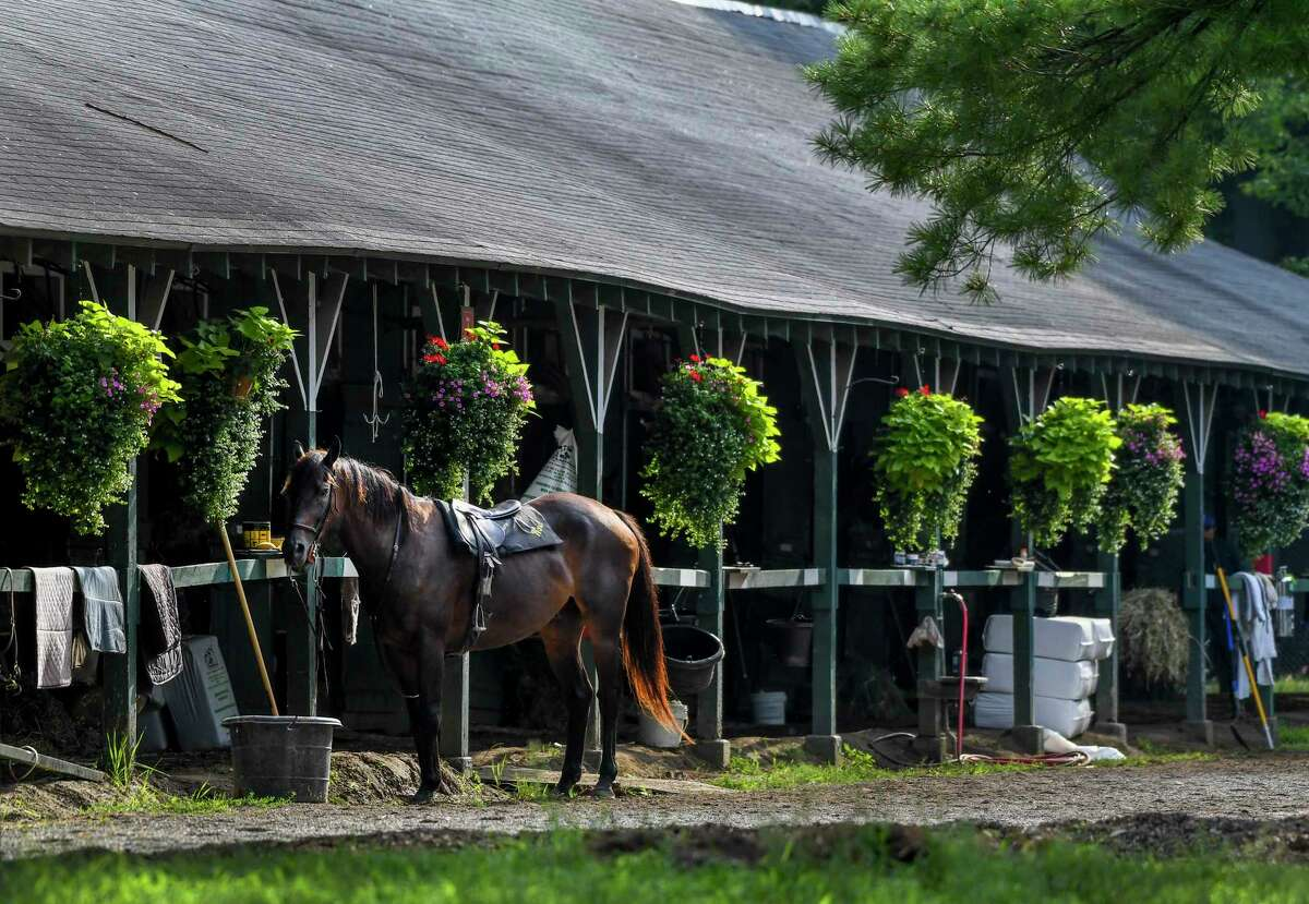 A lead pony stands idle at the front of a barn on a beautiful morning Thursday Aug.13, 2020 at the Saratoga Race Course in Saratoga Springs, N.Y. Photo by Skip Dickstein/Special to the Times Union