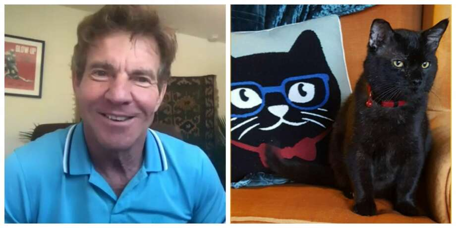 Houston's Dennis Quaid just adopted a furry friend of the same name from the Lynchburg Humane Society in Virginia. Photo: WSLS News 10