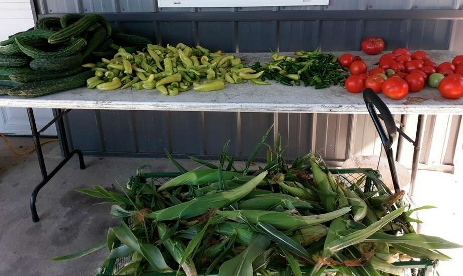 August yields plenty of vegetables, including zucchini for making the fritter recipe Lovina Eicher shares in this week's column. (Courtesy photo)