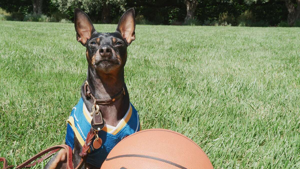 """Larry O'Brien Lacob, Warriors majority owner Joe Lacob's dog, is being touted on the team's social media channels as Golden State's """"Draft Lottery lucky charm."""""""