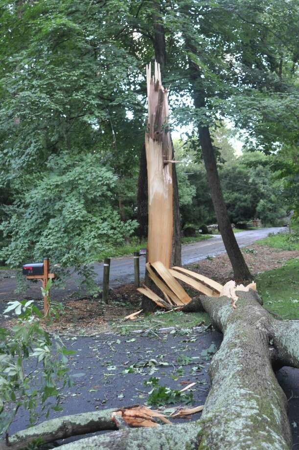 A tree was split open and lay across Limestone Road after Storm Isaias raged through town August 4. Photo: Macklin Reid / Hearst Connecticut Media