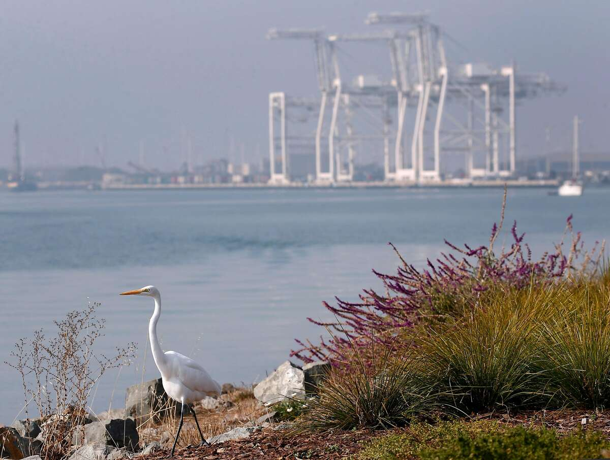 An egret stands on the Oakland Estuary shoreline in front of gantry cranes in Oakland, Calif. on Tuesday, Nov. 20, 2018. A much needed rainstorm is expected bring relief to the Bay Area, cleaning out unhealthy air and possibly dousing the region with up to 2 inches of rain.