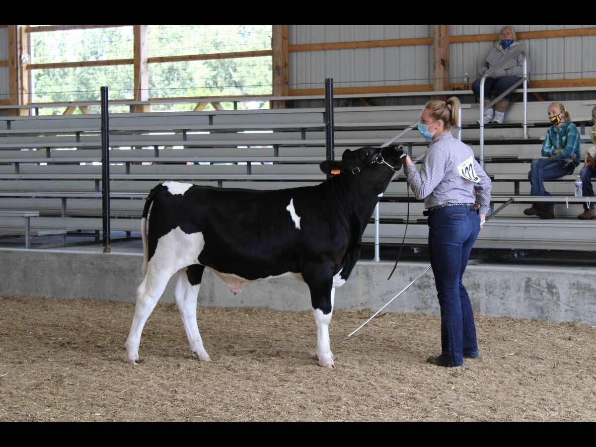 Grand champion dairy prospect Brynn Polega. (Huron Community Fair/Courtesy Photo)