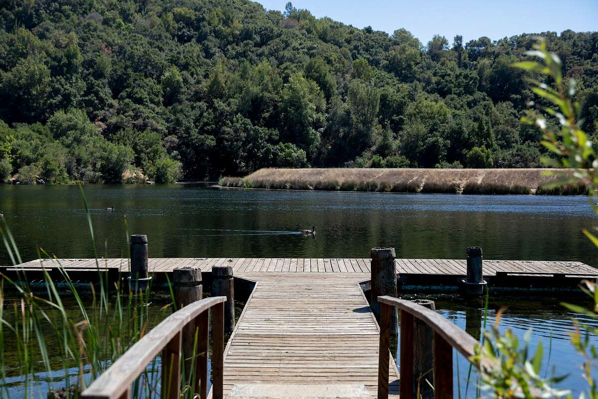 Geese swim along Boronda Lake at Foothills Park in Los Altos Hills, Calif. Tuesday, August 11, 2020. Since it opened in 1965, Foothills Park has been restricted to residents, a practice some residents consider discriminatory. The city council finally made some concessions, allowing up to 50 non-residents a day, but activists say it's not enough.