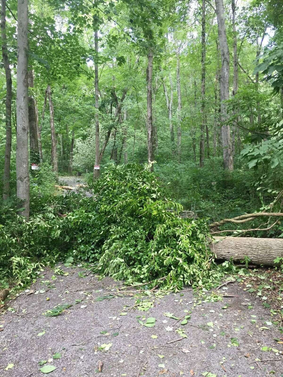 One of the downed trees cleared by NRVT volunteers in Wilton following Tropical Storm Isaias, which hit the region on Tuesday, Aug. 4.