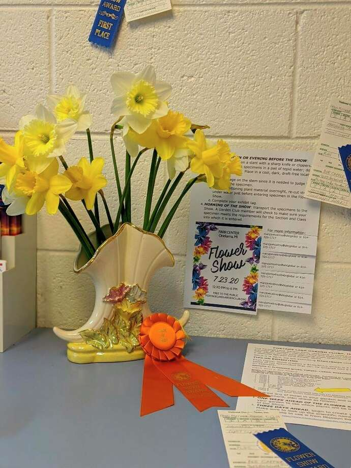 A display of daffodils accompanied by a poster about how to enter horticulture into an National Garden Club Flower Show and some ribbons won by Bee Capper at Mason County Garden Club Flower Show in 2019. Compliments of Susan Halloran, April. The floral display was part of a series sponsored by the Portage Lake Garden Club. (Courtesy Photo)