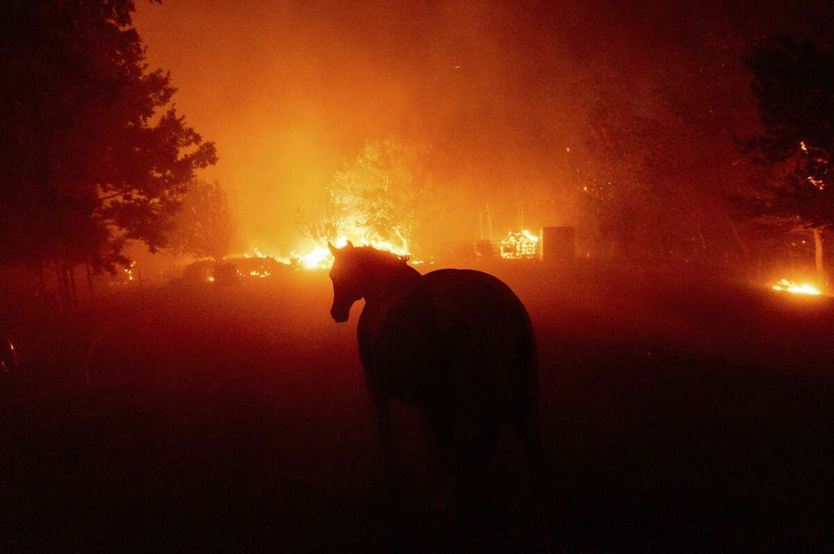 A horse walks towards flames as the LNU Lightning Complex fires tear through Vacaville, Calif., on Wednesday, Aug. 19, 2020. Fire crews across the region scrambled to contain dozens of wildfires sparked by lightning strikes as a statewide heat wave continues.