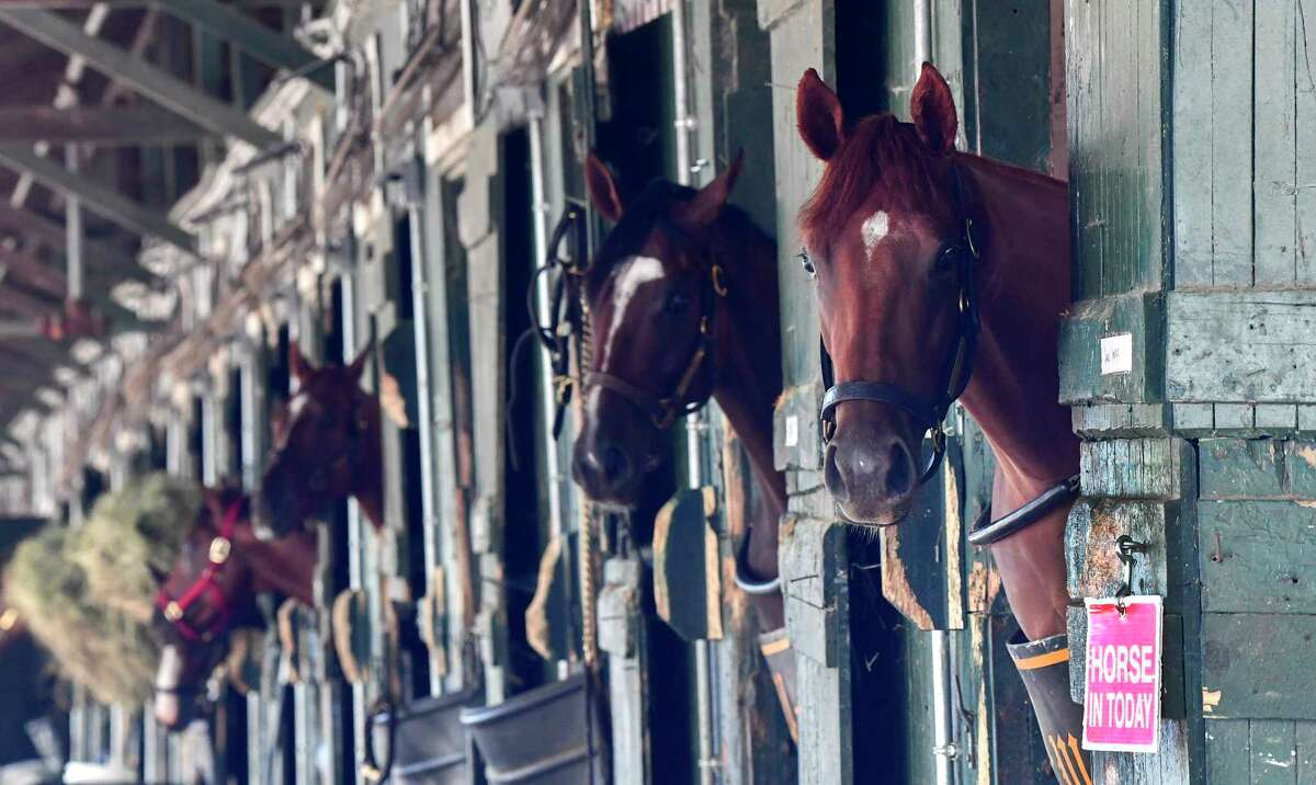 Always curious, horses watch all of the interesting things that pass by their barns Wednesday Aug.19, 2020 at the Saratoga Race Course in Saratoga Springs, N.Y. Photo by Skip Dickstein/Special to the Times Union