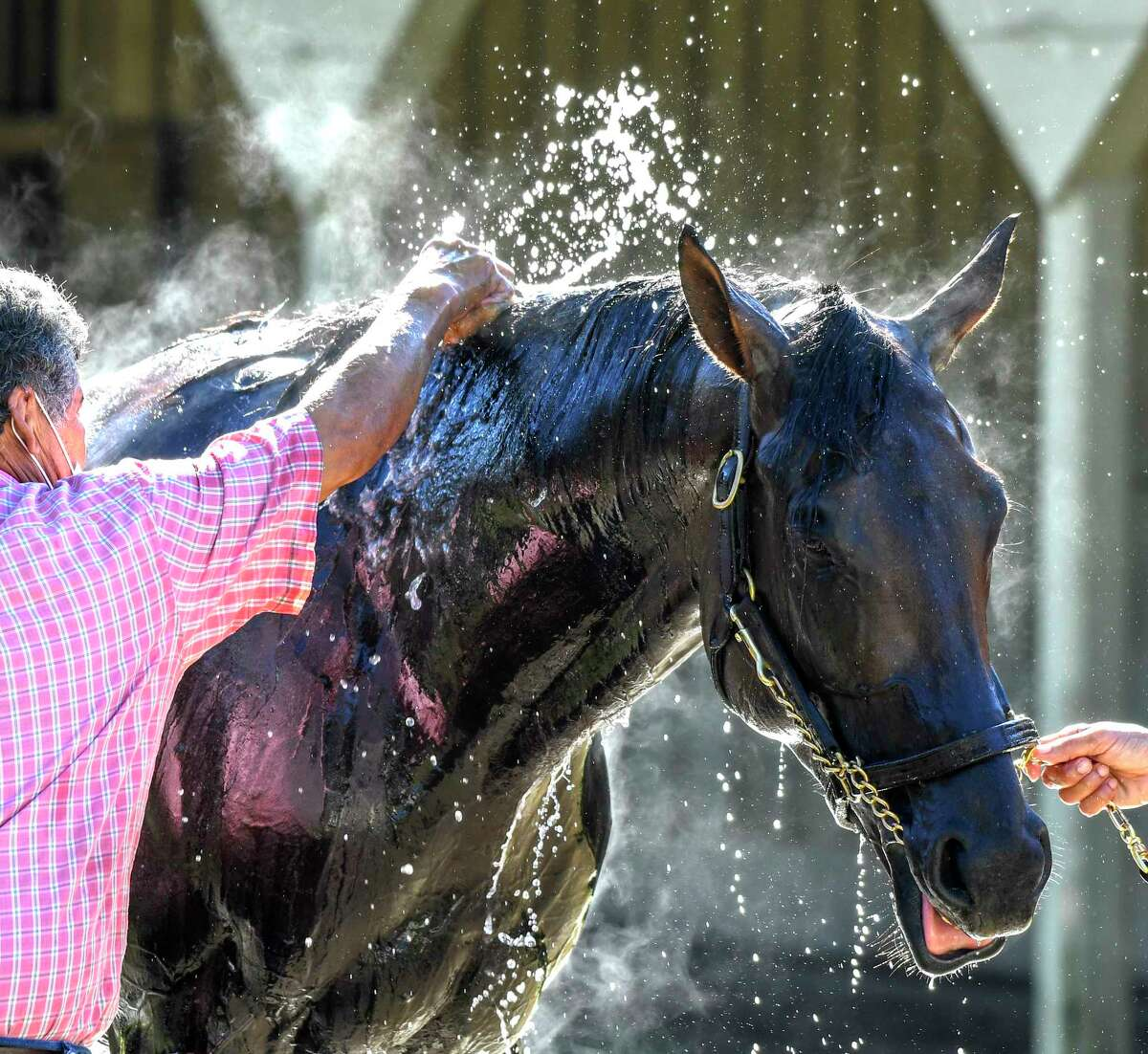 Caracaro, second to Tiz the Law in the Travers Stakes gets a bath this morning after his morning exercise Thursday Aug.20, 2020 at the Oklahoma Training Center in Saratoga Springs, N.Y. Caracaro was going to make his next start in the Sept. 5 Kentucky Derby, but is out with an injury. Photo by Skip Dickstein/Special to the Times Union