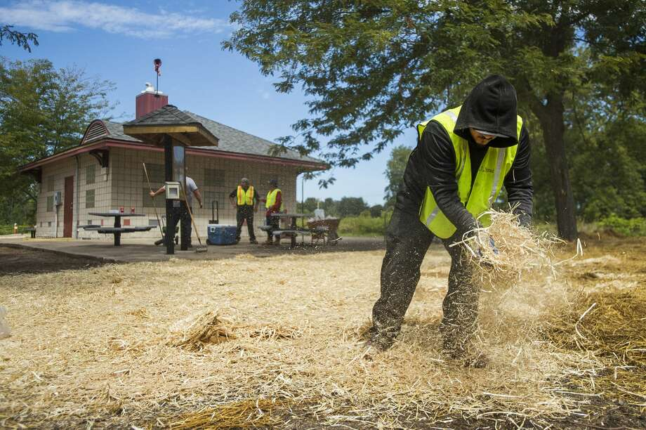 Javier Alfaro with Signal Restoration, right, spreads straw over the ground after grass seed was laid down Thursday, Aug. 20, 2020 near the Sanford Flag Memorial, which was destroyed by the flood in May. (Katy Kildee/kkildee@mdn.net) Photo: (Katy Kildee/kkildee@mdn.net)