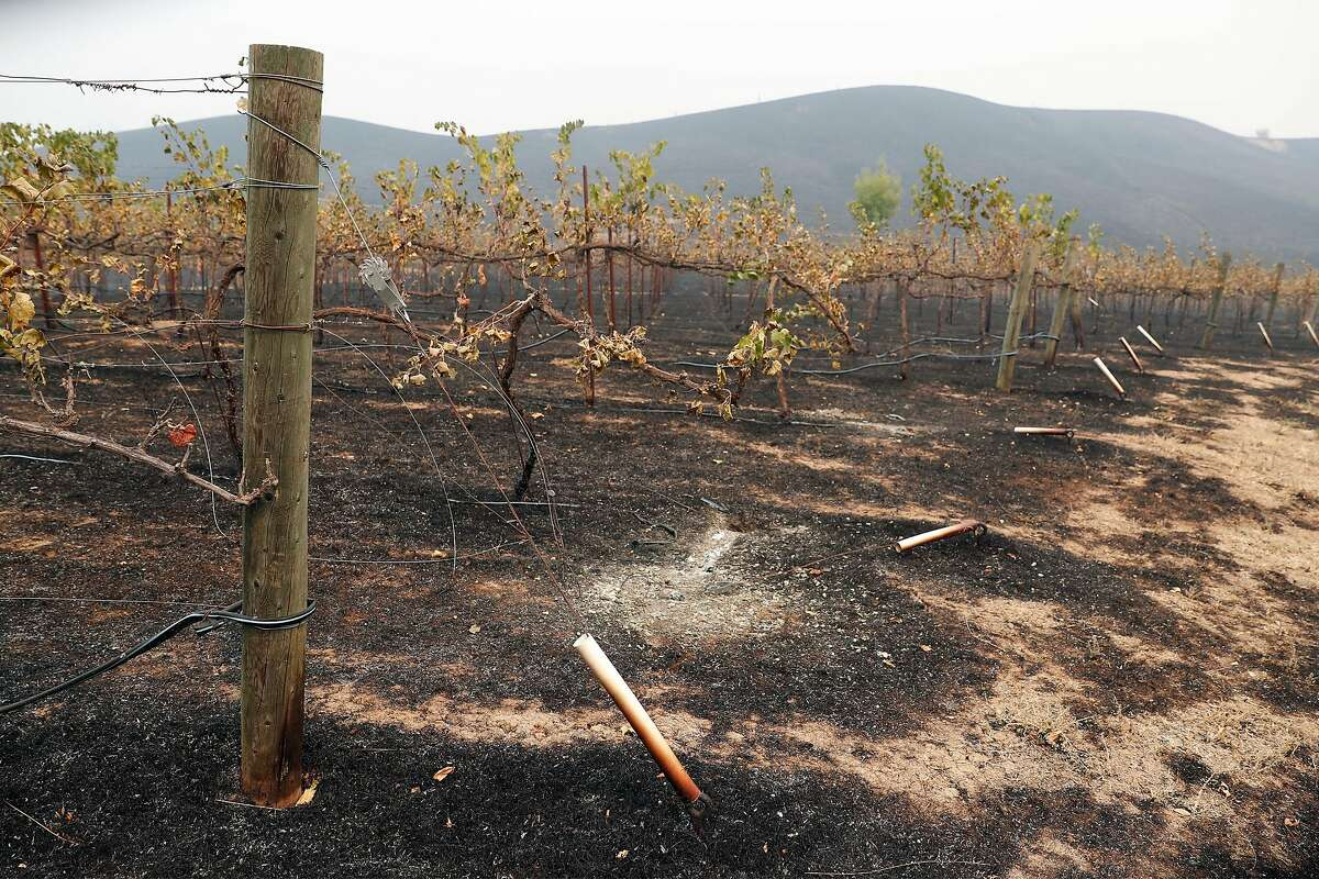 Scorched vineyard at La Borgata Winery and Distillery after LNU Lightning Complex fire burned in Vacaville, Calif., on Thursday, August 20, 2020.