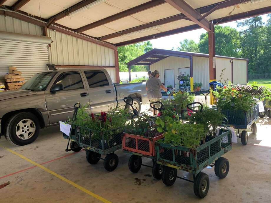 Master Gardener volunteers verify orders before delivery to vehicle pick-up line during the spring plant sale. This year's fall plant sale will be held online Sept. 15. Photo: Courtesy Photo